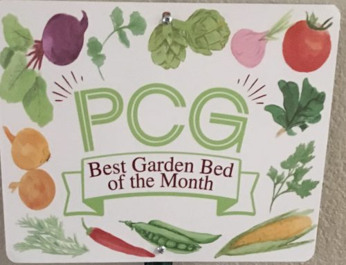 New Garden Bed of the Month Contest