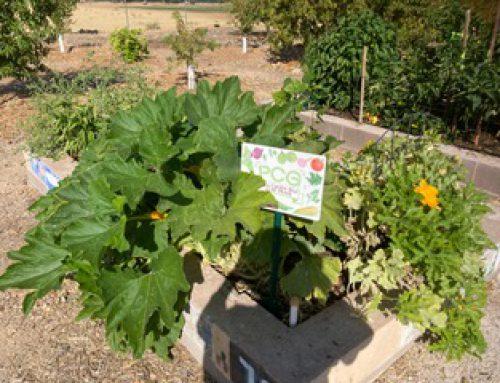 Garden Plot of the Season